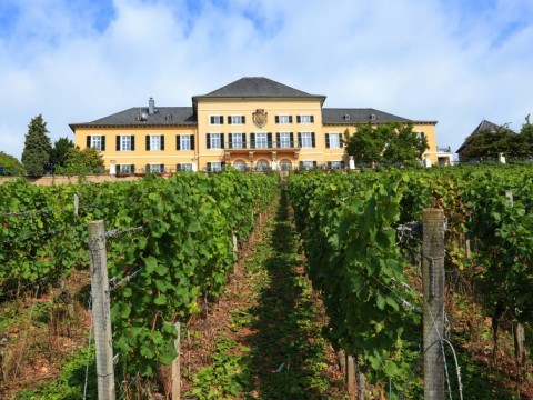 Schloss Johannisberg © Kristan